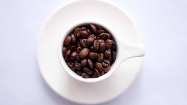 Gatunki kaw świata